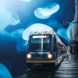 train jellyfish freetoedit