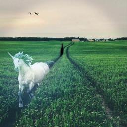 freetoedit unicorn demon horse field creepy horror run running art sky fear scared runforyourlife wedding