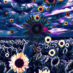 sunflowers flowers field painting sky hand sun freetoedit srcsunflowersplash sunflowersplash