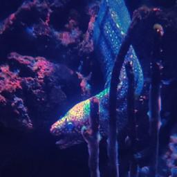 eel myphotography