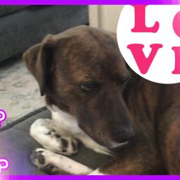 lovemydogs freetoedit