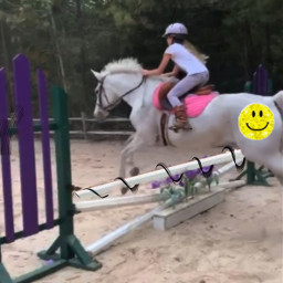 freetoedit horse horsebackriding horsejumping horsejump