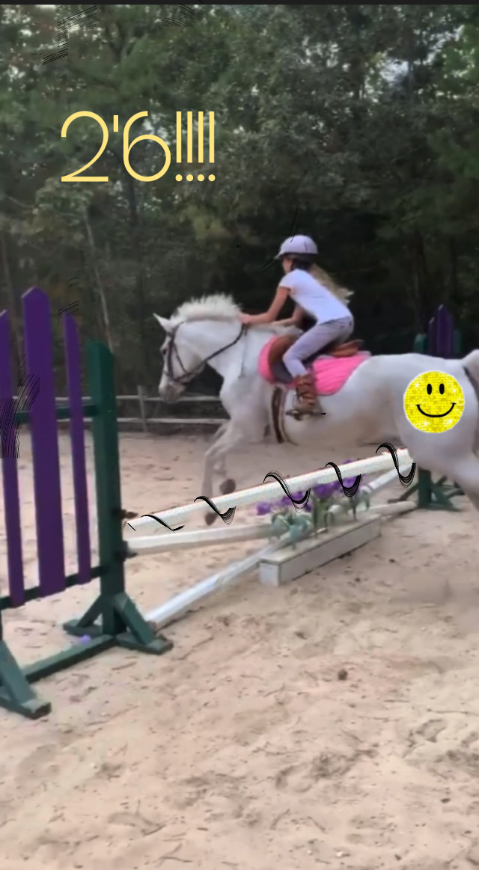 The original jump was 2'6 #horse #horsebackriding #horsejumping #horsejump