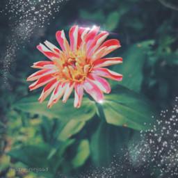 bringbackremixchat saveremixchat stopforcingkidstoremix surreal alien alienflowers flowers surrealflowers prettyflowers plants hallucination unreal fantasy fantasyflowers dream dreaming wonderland dreamworld fantasyland fantasyphotos surrealphotos alienworld freetoedit local
