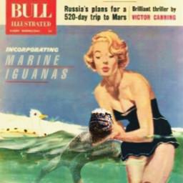 iguana swimlesson swimming beach