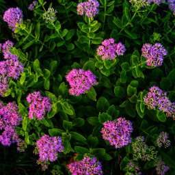 flowers local