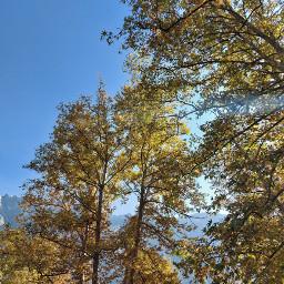 fall likeforlikes freetoedit pcautumninmycity autumninmycity