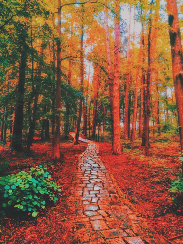 #fall is #coming #season #autumn #trees #nature #beautiful #outside