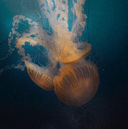 freetoedit jellyfish underwater gallaxy stars