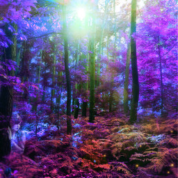 freetoedit forest magical whimsical fantasy