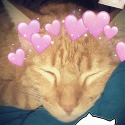 gatos kawaii freetoedit