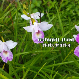 nature purpleflower orchid picsart dontsteal incredible_isabel adcre-cloud isabel-helps   ❝𝑇ℎ𝑎𝑛𝑘 local adcre isabel