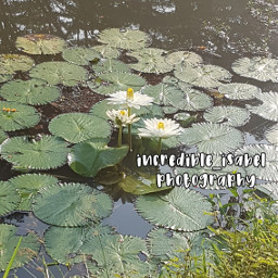 nature photography waterlily lilypad incredible_isabel adcre-cloud isabel-helps   ❝𝑇ℎ𝑎𝑛𝑘 local adcre isabel