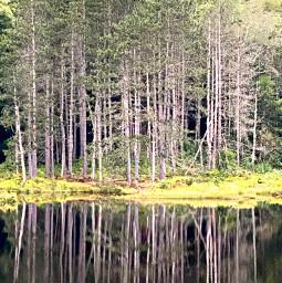 mirror mirrorlake westvirginia scenery woods photography photooftheday photo photos freelancephotographer freelancephotography quiet sirene lake water mirrorimage