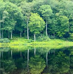 photooftheday photography photo mirror mirrorimage mirroreffect lake woods scenary scenery scene freelancephotographer freelancephotography trees