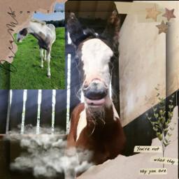 horsees foals freetoedit