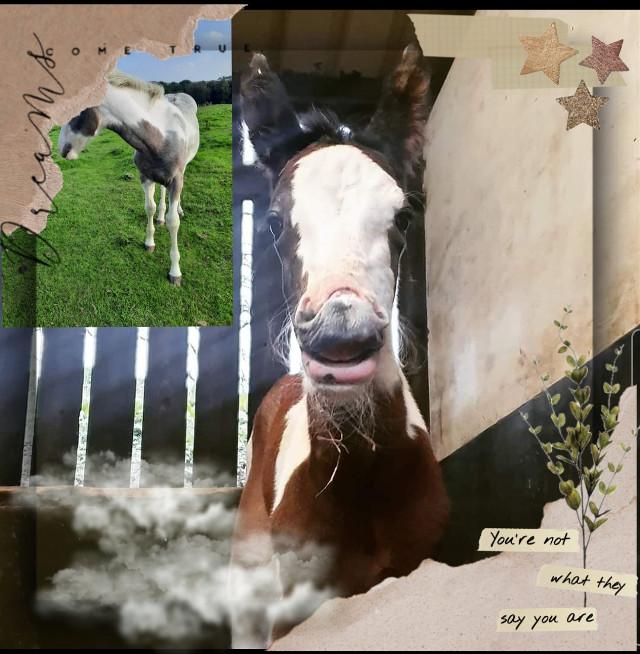 #horsees #foals