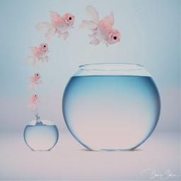 fish fishes fishbowl jumpintofreedom surreal surrealart surrealism water srcpinkfishies pinkfishies