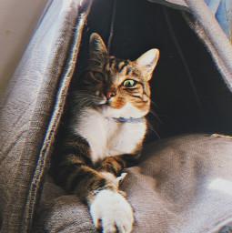 freetoedit cat preset reply