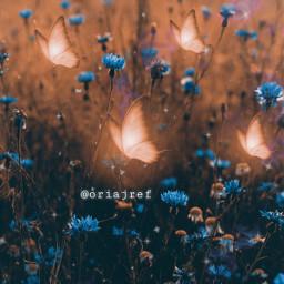 freetoedit borboletas flores fantasia sonho picsart picsartbrasil