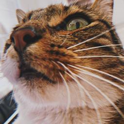 freetoedit cat preset replay