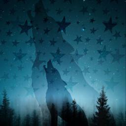 freetoedit nature forest trees wolf stars sky night challenge srctrendystars trendystars