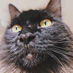 freetoedit cat blackcat preset replay