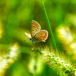 freetoedit photography butterfly nature landscape green beautiful local