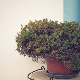 housewall countryhouse rustic plant oldtable rustyiron pottedplant succulents outdoors simplicity rusticbeauty urbannaturephotography freetoedit