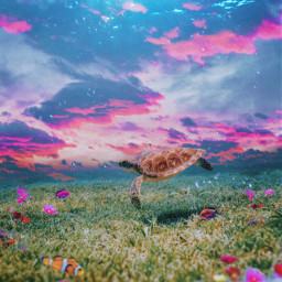 madewithpicsart madebyme myedit seaturtle flowerymeadow fish colorful clouds underwater surreal