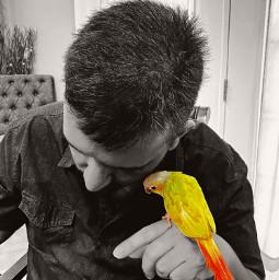 parrot parrots parrotlove photography photo color edit blackandwhite