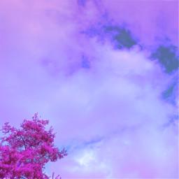 freetoedit sky clouds purple purpleclouds purplesky surrealistic treeandsky