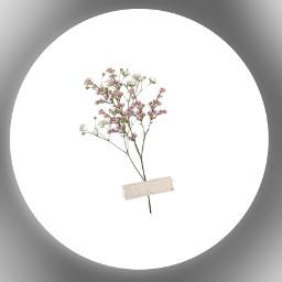 freetoedit flower pretty