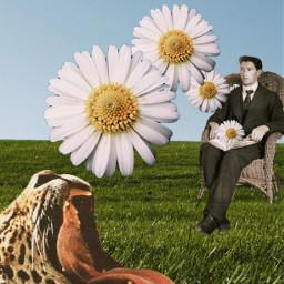 daisy book man cheetah
