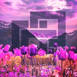 freetoedit remix wallpaper flowers purple landscape default local