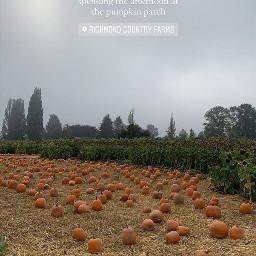 aesthetic asthetic aesthetics asthetics pumpkins pumpkinpatch hay orchard halloween autumn fall