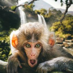смешные картинки фото животные local