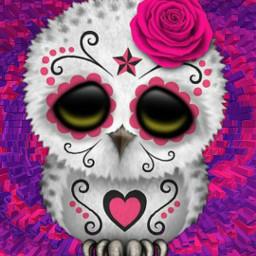 owl pink purple paintedface freetoedit local