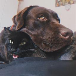 freetoedit dot cat blackcat labrador autumn preset replay
