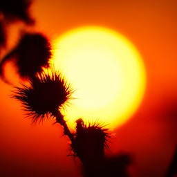 photography sunset silhouette landscape red autumn hellooctober freetoedit local