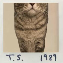 freetoedit 1989 taylorswift1989 1989album 1989era swiftie taylorswift taylorswiftalbum