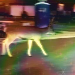 freetoedit deer replay effects edit