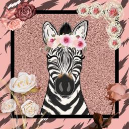 zebra freetoedit ecanimalprintbackgrounds animalprintbackgrounds