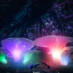 madewithpicsart picsart papicks mushroom glow glowinthedark ants jungle forest night freetoedit local