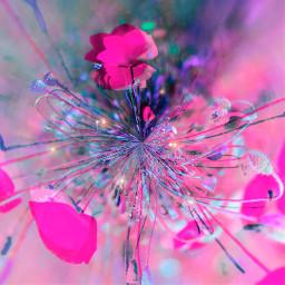 freetoedit flowers pinkflowers hotpink