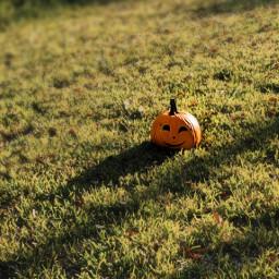 pumpkin jackolantern landscape october autumn halloween freetoedit local