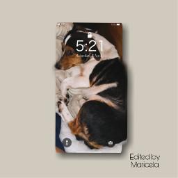 puppy petsandanimals doggo doggy dog perro mascotas cachorro freetoedit local rcphonescreenwallpaper phonescreenwallpaper