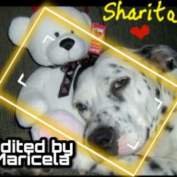 sharita pet pup puppy petsandanimals doggo doggy perro mascotas cachorro freetoedit local srcyellowfocusframe yellowfocusframe