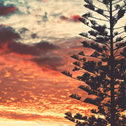 nature sunset endoftheday goldenhour autumnsunset skyandclouds sunsetcolors sunsetsky tree coniferoustree againsthelight silhouette itsallpeacefulandquiet comtemplationmoments peacefulanquitelove humanemotions natureisbeautiful earthdayeveryday beautifulworld ourworld naturephotography freetoedit